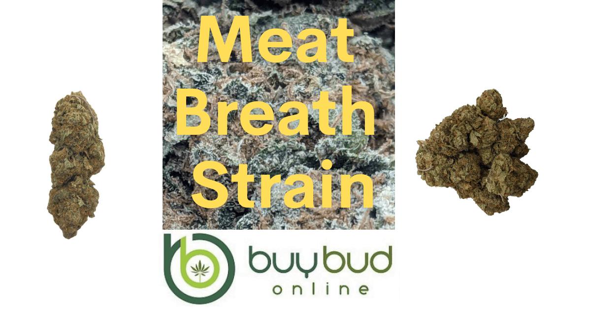 Meat Breath Strain
